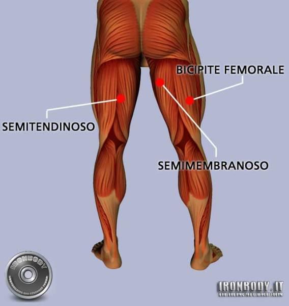 Come rinforzare muscoli delle gambe - IL CONSIGLIA SALUTE