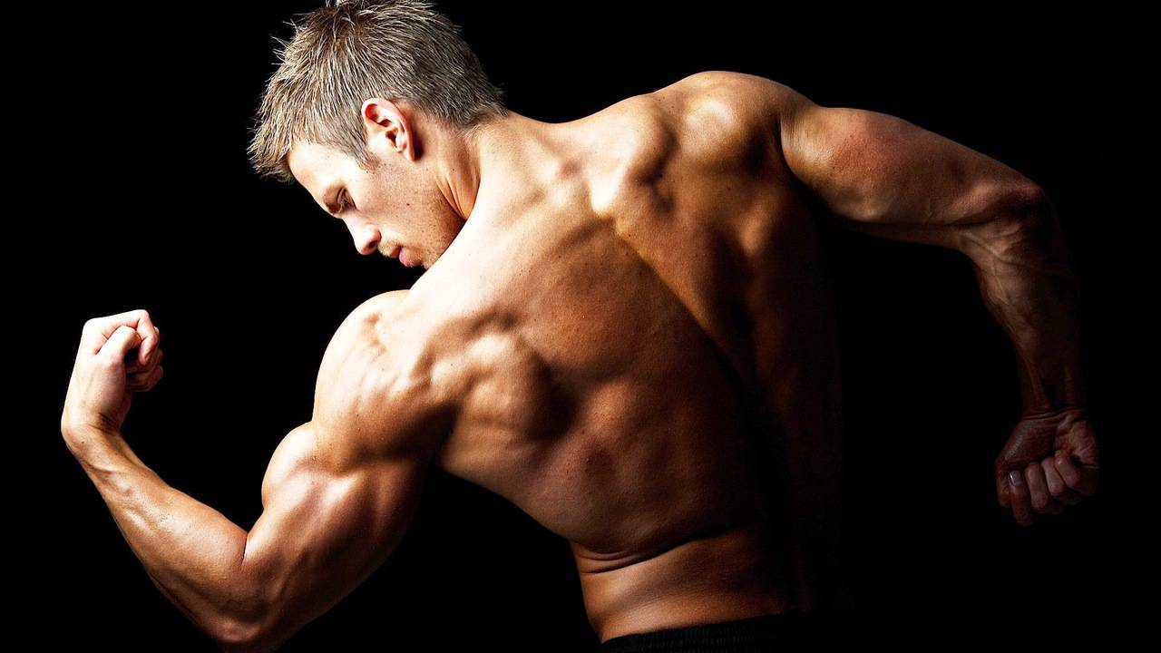 bodybuilding it Guides And Reports
